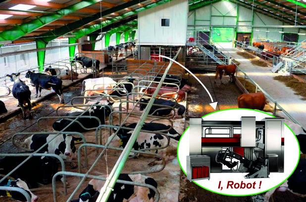 Роботизираната система може да издоява до 130 крави три пъти в денонощието (снимка: Алфа-микс)