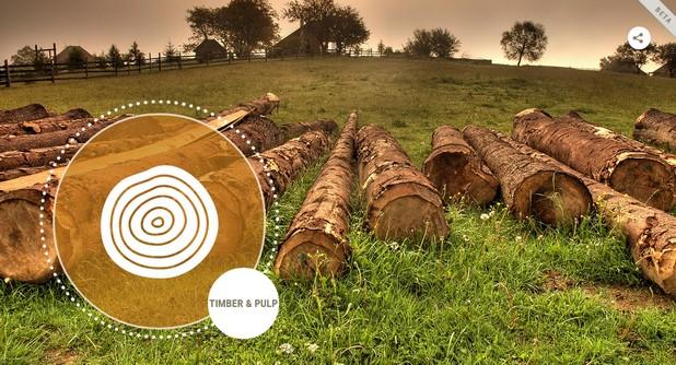 Планетата ни губи повече от шест милиона хектара тропически гори всяка годината